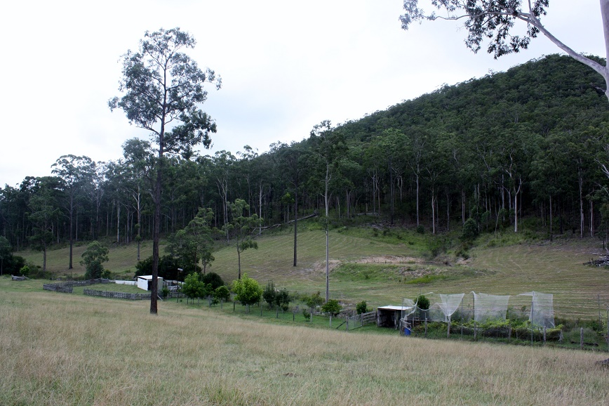 Vege patch